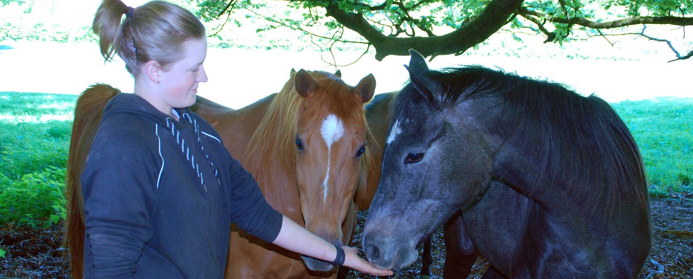 In ihrem FÖJ kümmert sich Jette Reimer viel um die Tiere im Museum. Hier ist sie mit den Senner Stuten Odette (Fuchs) und Xenia zu sehen. Foto: LWL/Lakenbrink