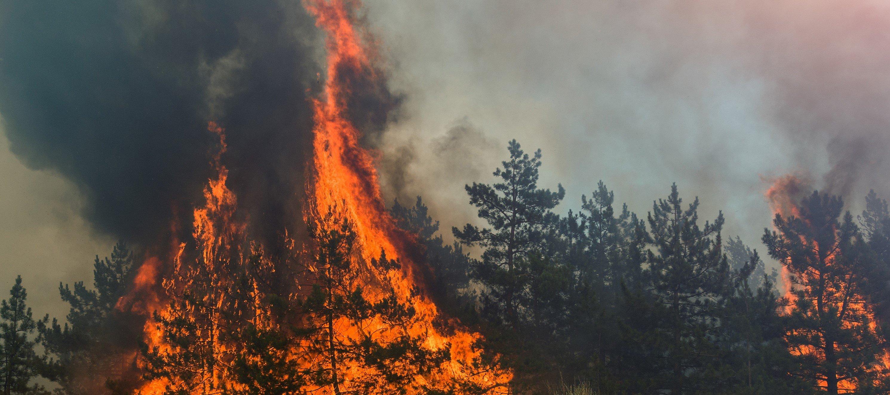 In Deutschland herrscht regional große Waldbrandgefahr. Quelle: WetterOnline