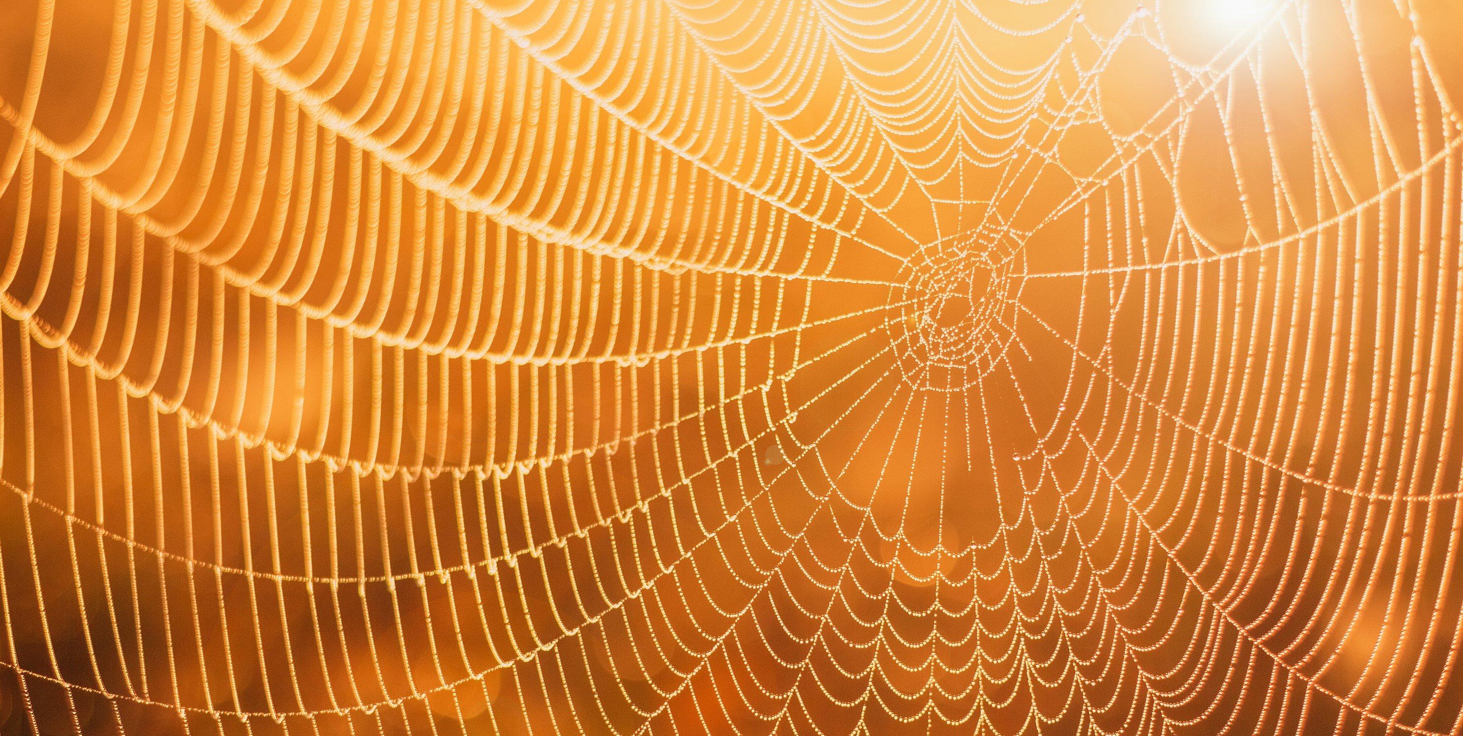Typisch Altweibersommer: Morgentau macht Spinnennetze gut sichtbar.